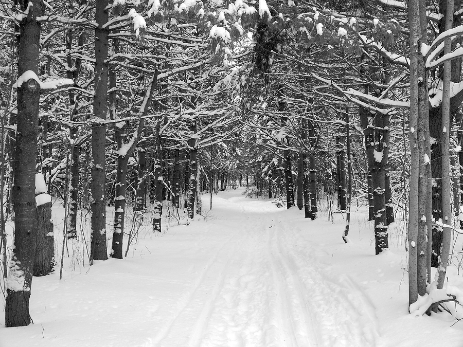 snowy-woods1