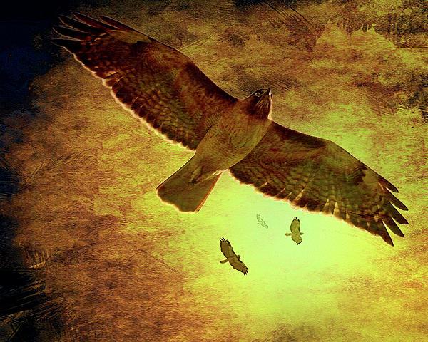 """""""Flight of the Golden Hawk"""" by Wingsdomain"""