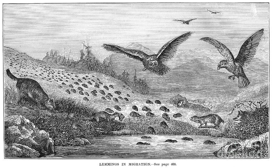 """Granger, """"Lemmings in Migration"""""""