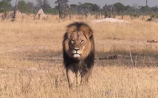 Aslan and Cecil the Lion's Death | Better Living through Beowulf